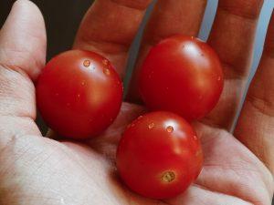 alimenti funzionali pomodori pane funzionale salus